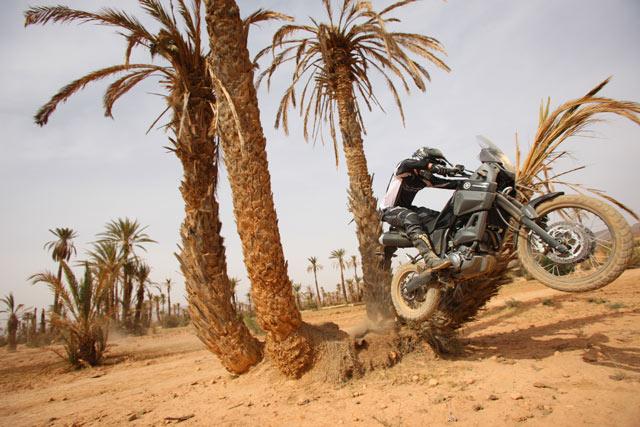 Yamaha XT 660Z Tenere - Action